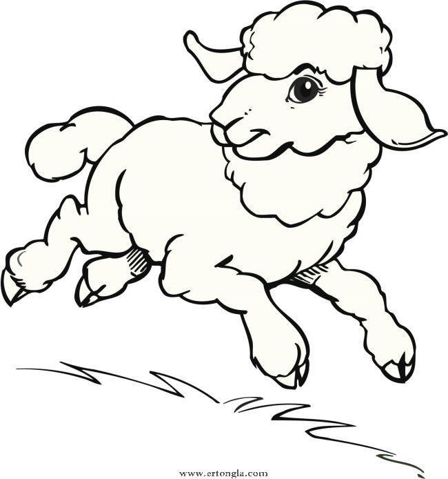 羊的简笔画 步骤 画法