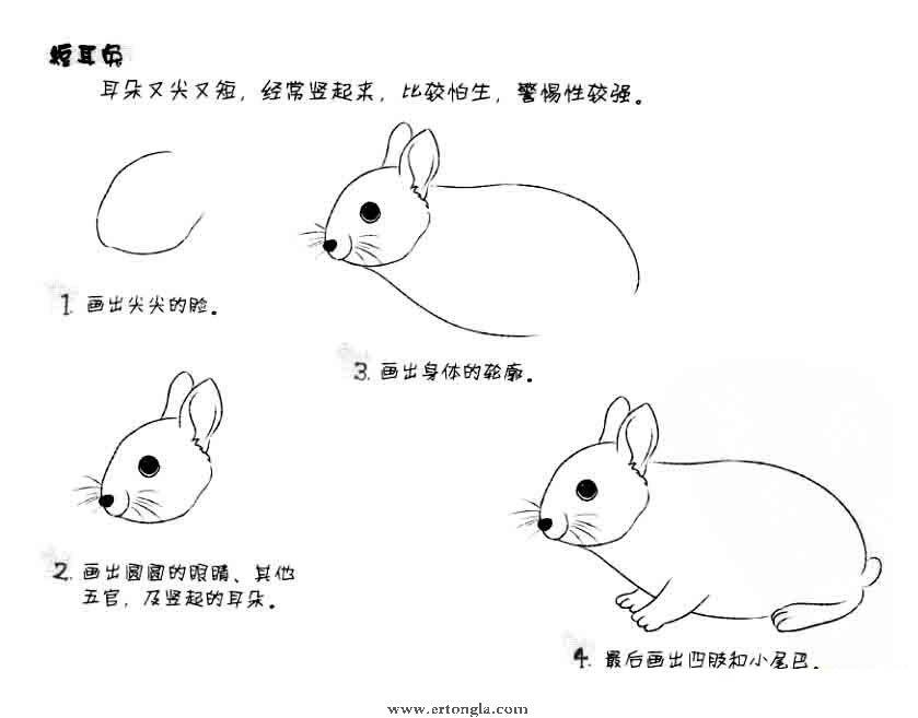 大白兔简笔画怎么画,动物简笔画,儿童啦网