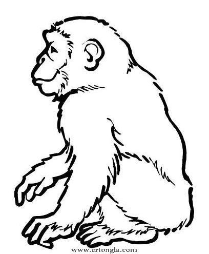 十二生肖猴简笔画怎么画