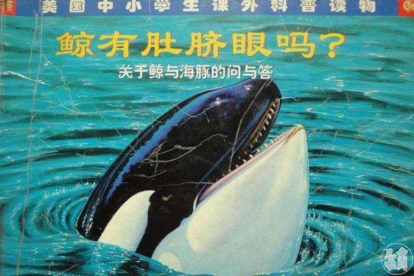 鲸有肚脐眼吗?